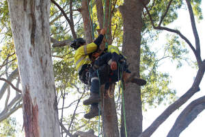Decending with injured climber