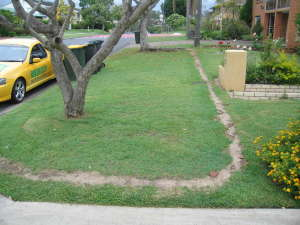 Root Barrier Service