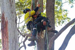 Decending with injured climber