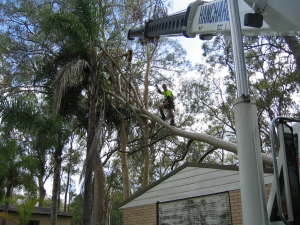 Tree Storm Damage Clearing Service