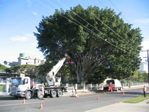 Commercial tree programmed maintenance