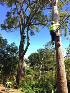 arborist Brisbane