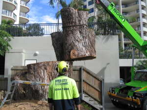 tree cutting