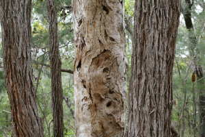 what is the difference between tree lopping and pruning