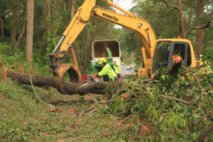 large tree removal