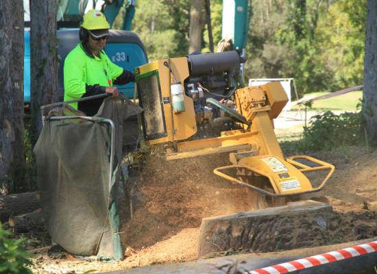 Performing stump grinding in Brisbane