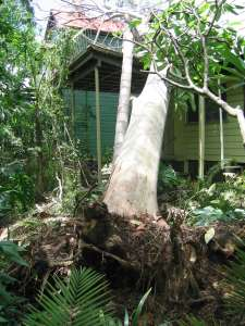 Tree Storm Damage Clearing