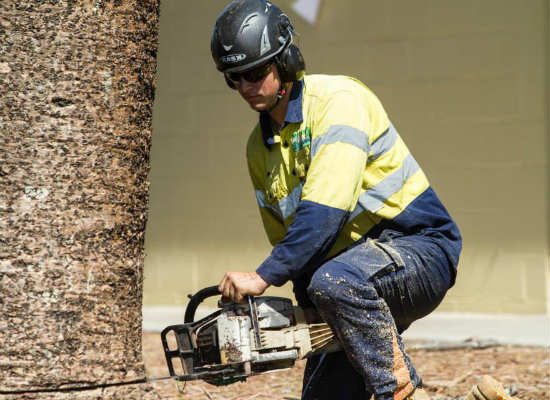 tree removal in brisbane