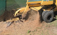 how much does stump grinding cost?