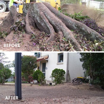 the cost of stump grinding in brisbane