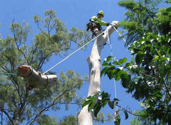 safe tree removal in brisbane